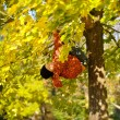 Stock Photo: Boy hang on tree in autumn