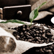 Coffe plant in granules — Stock Photo