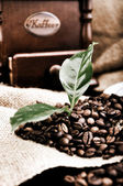 Vintage coffee grinder and fresh coffee — Stock Photo