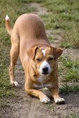Kneeling doggy — Stock Photo