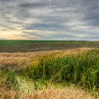 Marsh vegetation — Stock Photo #4433684