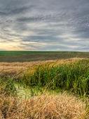 Marsh vegetation — Stock Photo