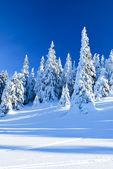 Snowy coniferous trees — Stock Photo