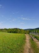 Fresh spring grass — Stock Photo