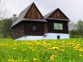 Dandelion on meadow — Stock Photo
