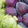 Cabbage — Stock Photo #4530475