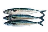 Mackerel — Stock Photo