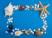 Frame van zeeschelpen — Stockfoto