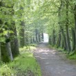 Path through spring forest — Stock Photo