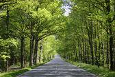 Estrada rural de verão — Fotografia Stock