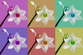Flower over color background — Stockfoto