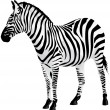 Zebra. Vector illustration. — Stock Vector