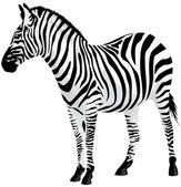 Zebra. Vector illustration. — Stock Vector