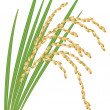 Royalty-Free Stock Vector Image: Spikelet of rice with the leaves on a white background. Vector i