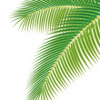 Leaves of palm tree on white background. Vector illustration. - Stok Vektör