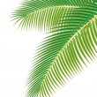 Leaves of palm tree on white background. Vector illustration. - 