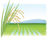 Rice field and a branch of ripe rice. Vector illustration. — Stock Vector