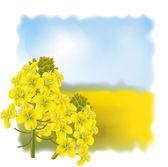 Rape flower on a background field. — Stock Vector