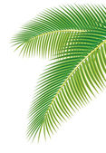 Leaves of palm tree on white background. Vector illustration. — Stok Vektör