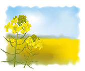 Mustard flowers with Field. Vector illustration. — Stockvektor
