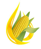 Corn oil. Stylized drop of oil, and corn cob. — Stock Vector