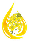 Canola oil. Stylized drop of oil and rapeseed flower. — Vetor de Stock