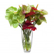 Foto Stock: Anthurium/ Flamingo flowers