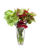 Anthurium/ Flamingo flowers — Stock Photo