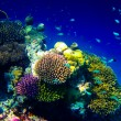 Under water world at Maldives - Stock Photo
