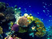 Under water world at Maldives — Stock Photo