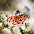 Stock Photo: Butterfly poised on flower