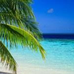 Постер, плакат: Tropical Paradise at Maldives