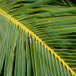 Palms — Stock Photo #4088262