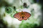Butterfly poised on flower — Stock Photo