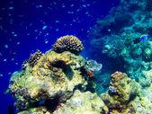 Pod vodní svět na maledivy — Stock fotografie