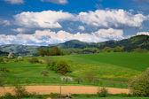 Spring landscape - green fields, the blue sky — Stock Photo