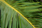 Palms — Stock Photo