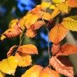 Foto de Stock  : Yellow leaves