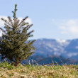 Christmas tree at alps — Stockfoto