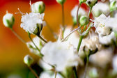 Flower texture — Stock Photo