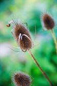 Plants in autumn — Stock Photo
