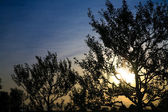 Wounderful sunset with sun and siluet of trees and mountains — 图库照片