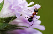 Insect on pink flower — Stock Photo