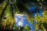 椰子树木夫妇 — 图库照片