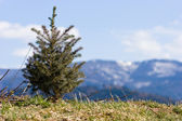 Christmas tree at alps — Stock Photo