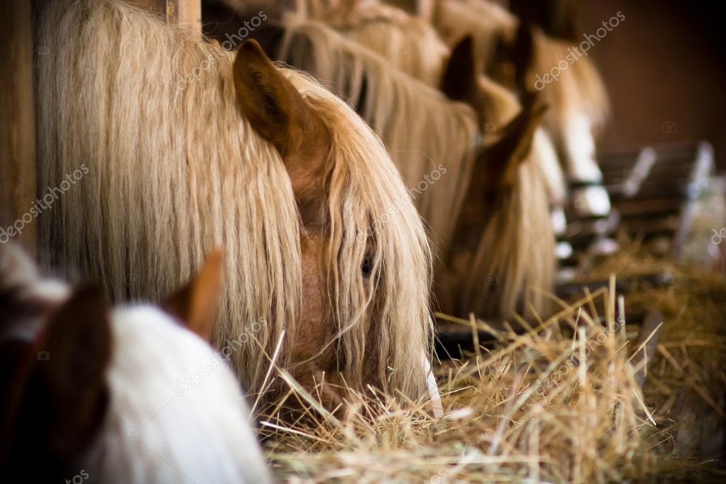 Many horses in a row eating at the stables — Stock Photo #4112889