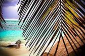 View on tropical beach throw palm — Stock Photo