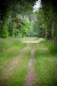 A beautiful straight path in a green environment — Stock Photo