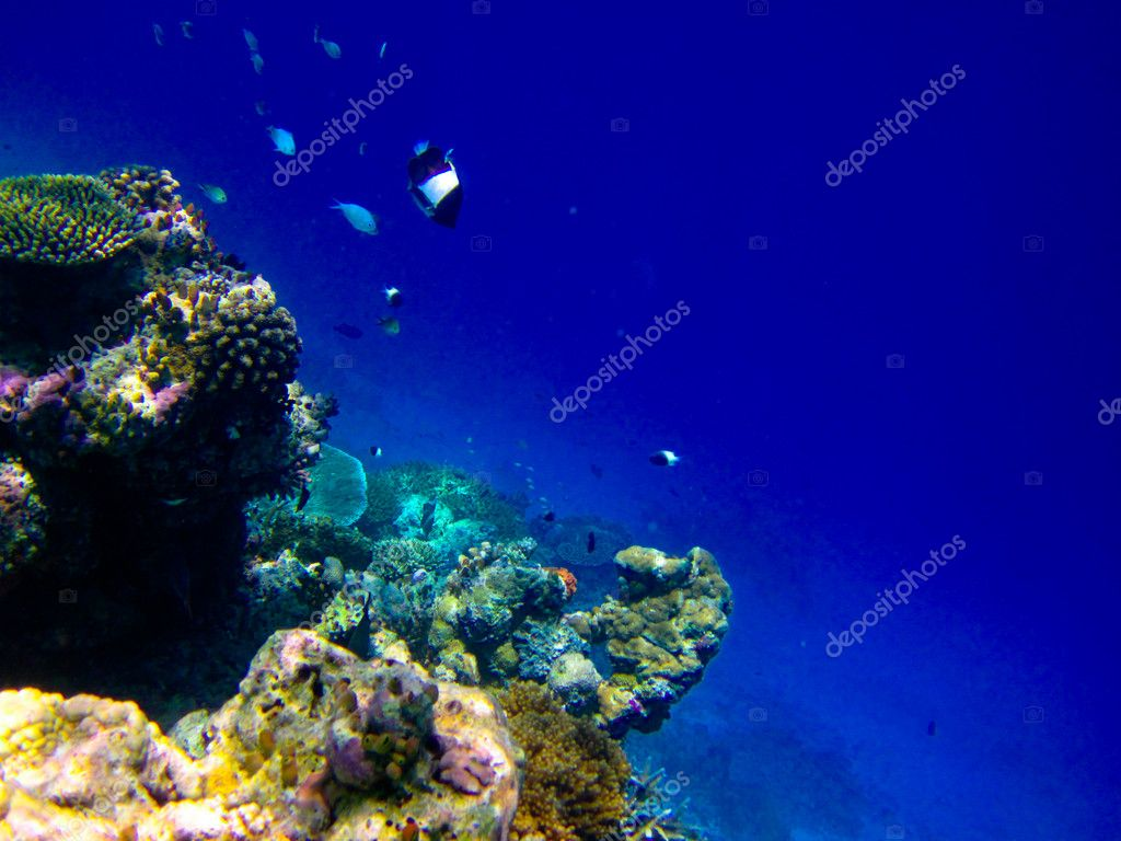 Under water world at Maldives blue clear sea — Stock Photo #4122227
