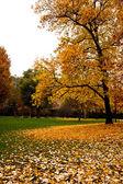 Podzim v itálii — Stock fotografie